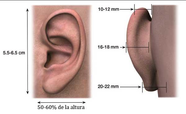 Cómo corregir las orejas de soplillo - Cirugías Estéticas